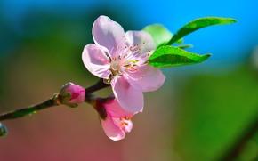 �����: cherry, �����, �����, �����, �����