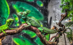 ��������: jurassic park, Iguana, �