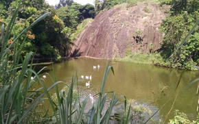 �������: verde, gansos, pedra, natureza, lago, agua, green, ducks, stone, nature, lake, water