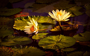 �����: Lily, �����, �����, �����