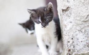 Животные: котёнок, малыш, стена