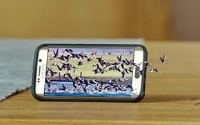 Hi-tech: Samsung Galaxy S6 Edge, Samsung, смартфон, природа, птицы