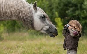 Настроения: лошадь, конь, морда, грива, мальчик, фотограф, папарацци, фотоаппарат
