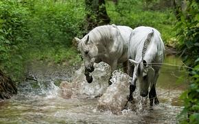 Животные: лошади, кони, река, вода, брызги