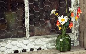 Фильмы: полевые цветы, ромашки, букетик, пузырёк, окно