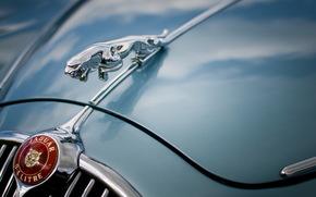 Машины: Jaguar, капот, эмблема, макро