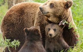 Животные: медведи, медведица, медвежата, детёныши