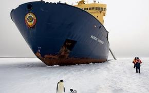 Корабли: корабль, ледокол, пингвин, лед, герб, СССР, люди, Антактика, Антарктида, юг