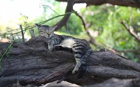 Животные: кот, кошка, спящая, сон, отдых, дерево