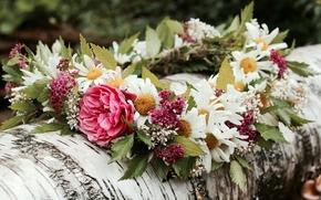 Цветы: венок, ромашки, лето, бревно