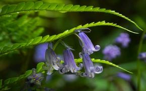 Цветы: колокольчики, трава, макро