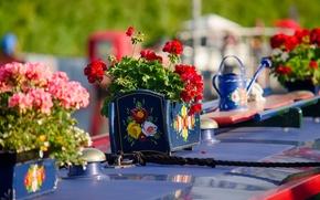 Цветы: герань, вазоны, канат