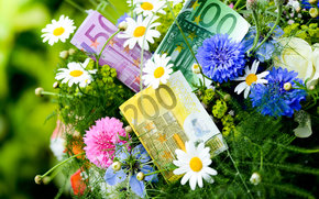 Разное: деньги, евро, банкноты, банкнота, купюра, валюта, цветы, василёк, ромашка
