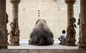 Ситуации: человек, слон, отдых, Индия