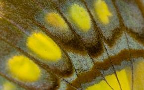 Текстуры: крыло бабочки, бабочка, крылышко, макро, текстура