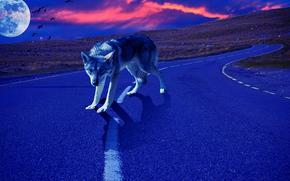 Рендеринг: закат, планета, дорога, волк