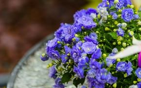 Цветы: цветки, бутончики, макро
