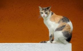 Животные: кошка, взгляд, стена, фон