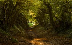 �������: Halnaker, West Sussex, South Downs National ParkEngland, United Kingdom