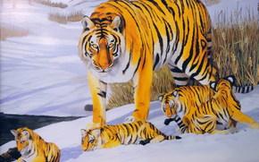 Животные: арт, Тигр, Тигрята, Детеныши, малыши, зима, снег, прогулка