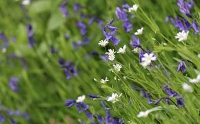 Цветы: луговые, колокольчики, макро, боке