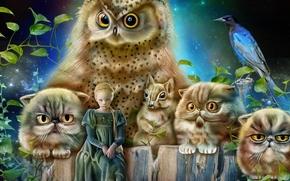Фантастика: девочка, принцесса, сова, коты, белка, птица