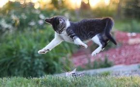 Животные: кошки, котята, прыжок, мордочка