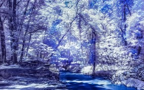 Рендеринг: река, лес, деревья, ночь
