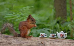 Ситуации: лес, дерево, ствол, белка, белочка, чашки, чай, чаепитие, прикол, юмор