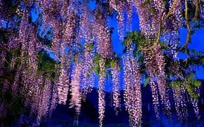 Цветы: ночь, дерево, ветки, цветы