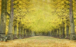 Пейзажи: осень, аллея, деревья, пейзаж