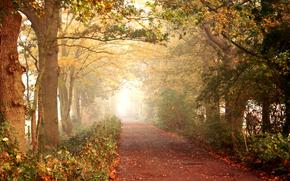 Пейзажи: аллея, парк, деревья, осень