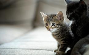 Животные: котята, малыши, парочка