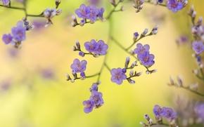 Цветы: сиреневые, бутончики, макро