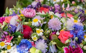 Цветы: букет, разноцветные, макро