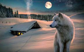 Рендеринг: зима, луна, дом, волк, деревья, природа