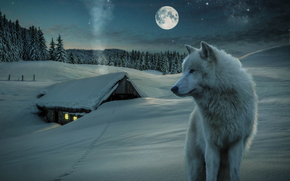 ���������: 3D, little house, snow, wolf, moon, night