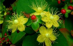 Цветы: цветы, листья, флора, растение