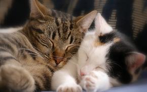 Животные: спящие котята, котята, сон, парочка