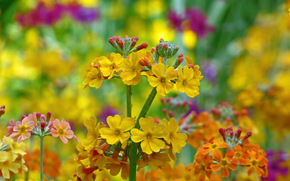 Цветы: цветы, флора, макро