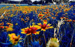 Макро: поле, цветы, макро