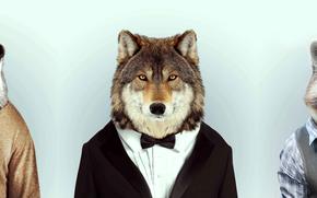 Обои Минимализм: Волк, енот, бобер, совместное, лесные, кенты
