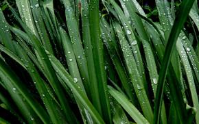 Макро: трава, роса, макро