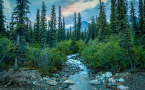 Пейзажи: Denali National Park, Alaska, река, лес, деревья, пейзаж