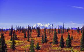 Пейзажи: Denali National Park, Alaska, поле, деревья, пейзаж