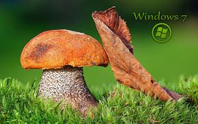 Макро: гриб, подосиновый, лист, мох, макро