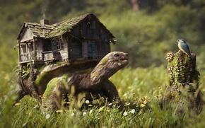 Фантастика: Manuel Peter, черепаха, домик, птичка, птица, цветы