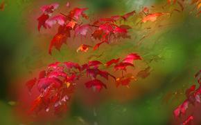 Макро: осень, ветка, листья, макро
