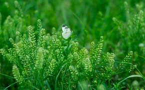 Макро: трава, растения, бабочка, макро