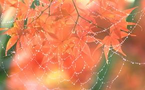 Макро: ветка, листья, паутина, капли, макро
